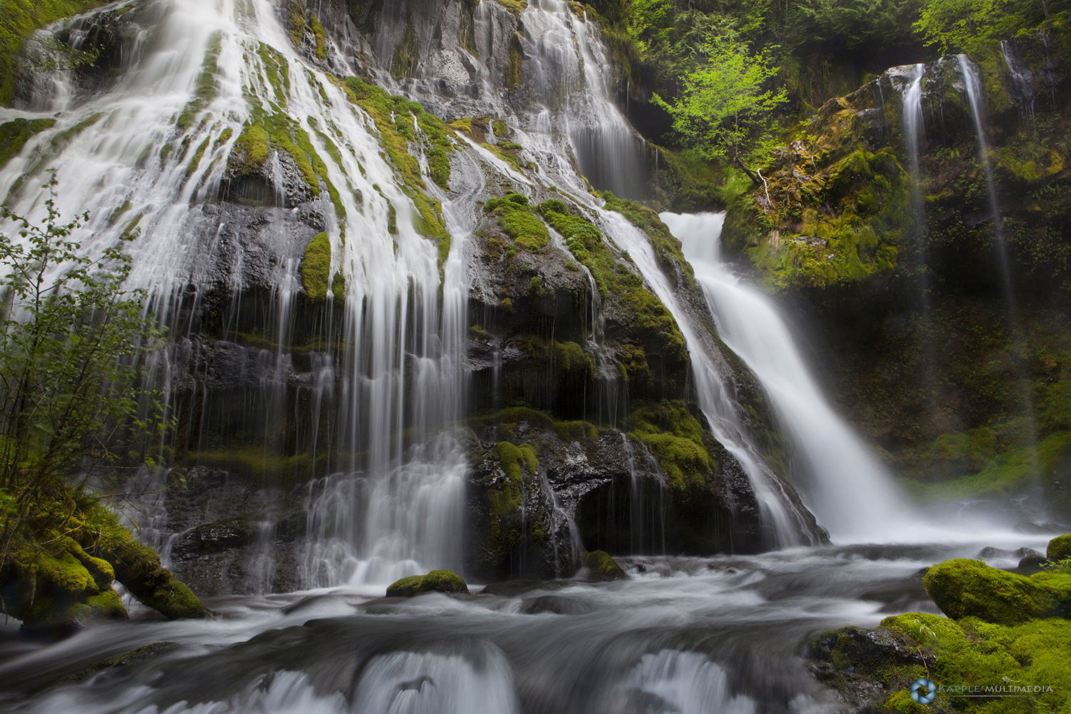 Panther Creek Falls in temperate rainforest, Gifford Pinchot National Forest, Washington