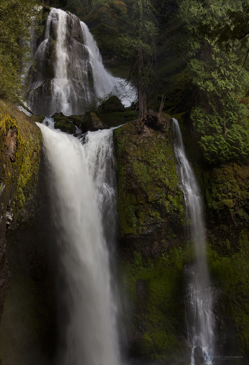 Falls Creek Falls in temperate rainforest, Gifford Pinchot National Forest, Washington, USA